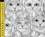 Cat Faces - Katzengesichter